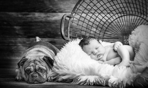 Babyfoto Dresden mit Hund